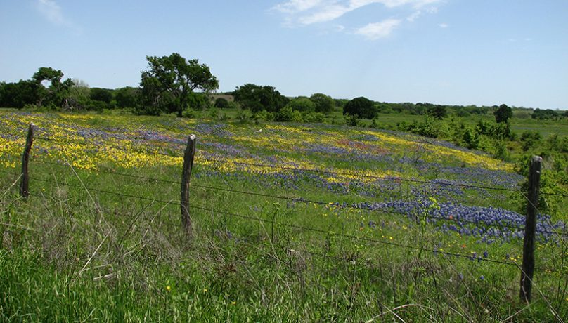 partners for conservation blackland prairie texas