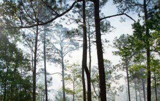 South Georgia Landscape