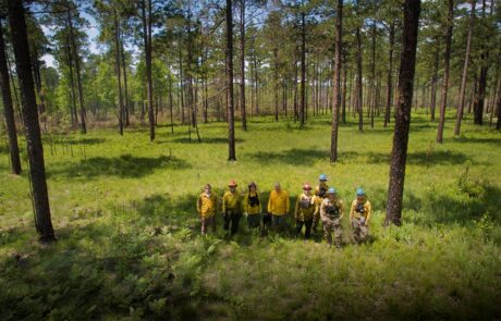 Group of people doing forest management